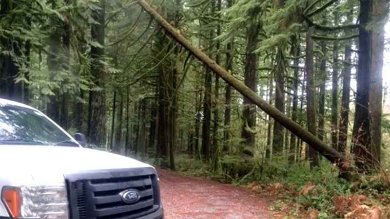 Attempted timber theft in Snohomish County, Washington baffles park officials (VIDEO)