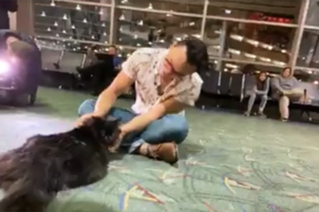Cat runs away for 5-years and travels 1,200 miles (VIDEO)