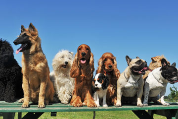 These are the most popular dog names across the Bay Area