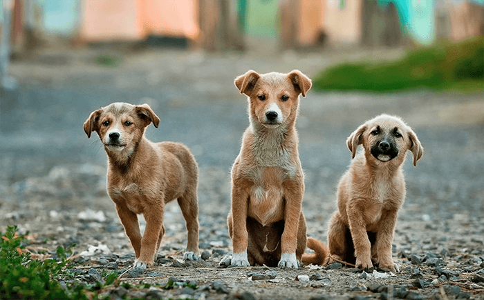 A non-profit organization will be flying to China to rescue dogs and cats caught in meat trade