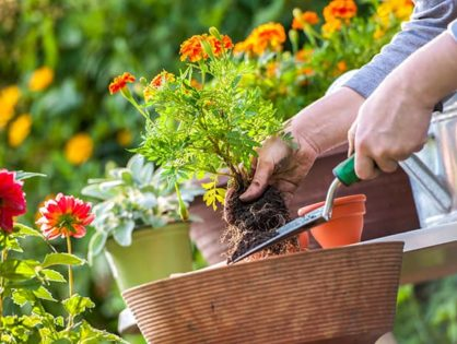Easy DIY landscaping tips to avoid hiring an expensive landscape professional