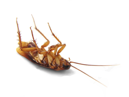My Home is Infested With Cockroaches, How Do I Get Rid of Them?